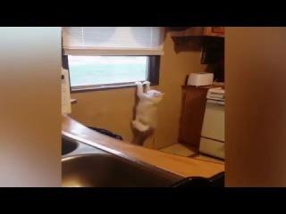Jay Vill - cat scary кошачий ужас