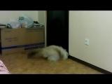 Как мой кот дверь открывает