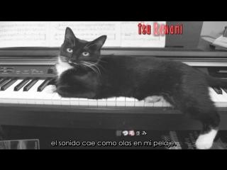 Kuroneko to pianist no tango