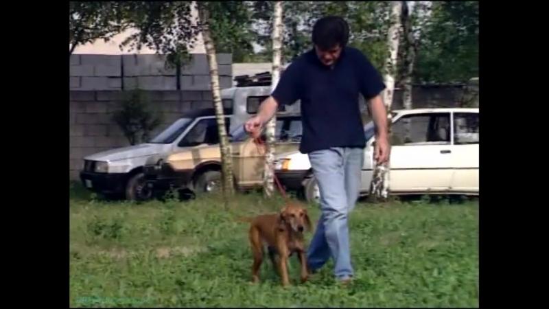 «Собаки. Охотничьи: Итальянская ищейка» (Документальный, 2002)