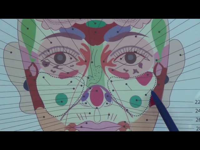Проекционные зоны органов на лице поясняет Ольга Гуреева