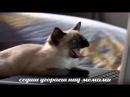 мемы про котовпо ржатьворованные глава 4