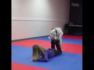 Amazingly well trained dog
