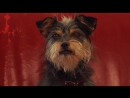 Пес-купидон  Gabe the cupid dog (2012)
