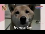 В Беларуси собакам запретят лаять с 2300 до 700