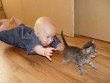 Лучшая подборка Кошки и Дети!Приколы с Детьми! Funny Videos Cats and Kids!
