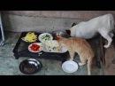 Кошки и собаки сыроеды raw vegan cats and dogs
