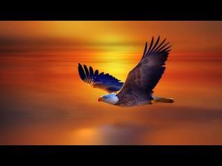Медитация Орла. Медитация для солнечного затмения.