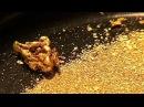 Среда обитания Золотая лихорадка 07 12 2011