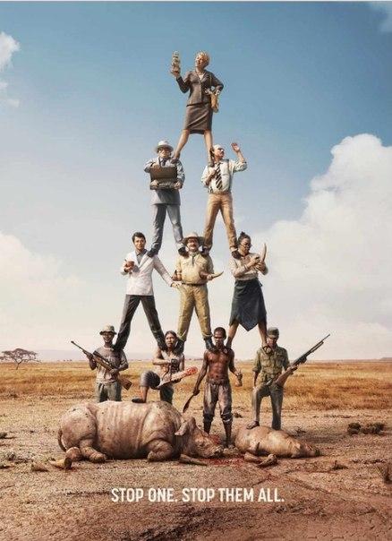 Северная Корея главный контрабандист слоновой кости и рога носорогов