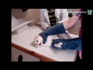 Лютый кот на приёме у ветеринара