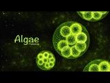 Photoshop Tutorial   Algae   Aquatic plant design