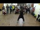 FClan Afro body movement - Goza a lo Cubano