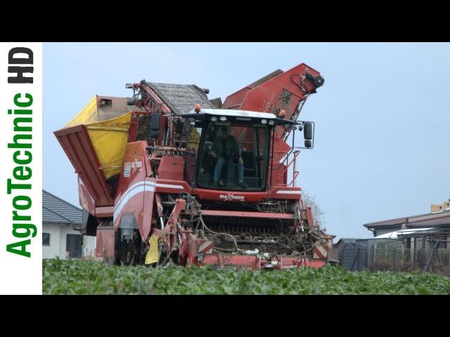 Kampania Buraczana 2016 | Grimme Maxtron 620, Claas Axion 850 | Lehmann Agrotechnika
