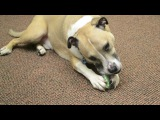 CRUNCHCORE from Petstages - Crunchy sound that dogs love!