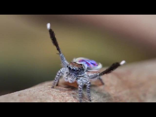 Spider conductor