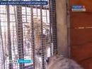2. Вести-Хабаровск. Кошкин дом, Тигрята Ригмы с 116 мин.