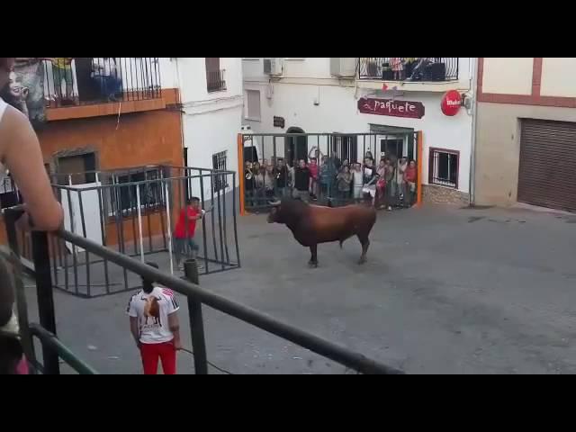 Toros Cogida Impactante | Toro dentro de la Jaula |