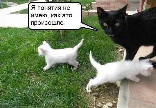 https://pp.vk.me/c626720/v626720029/adaa/CEzYpKzpjC4.jpg