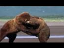 -Лучшие бои среди животных-