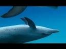 BBC Морские гиганты Мыслители глубин 2011 HD 720