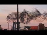 Recent Video of Bird Murmuration over New York 2015 - Allegedly resembling Vladimir Putin(?)