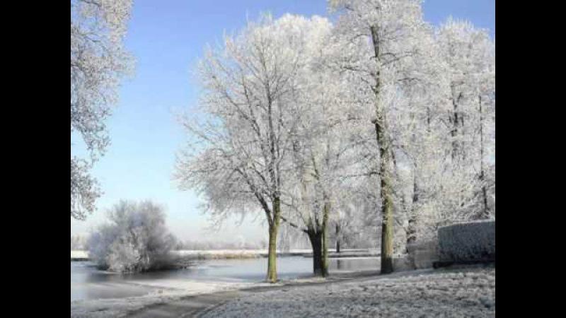 Музыка вальса в зимнем лесу....