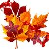 Осенний интенсив от художника Ольги Базановой
