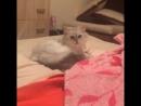 Говорящая кошка 😘❤️🐈Мяу