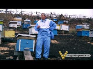 Зимовка пчел, когда заносить пчел, омшаник