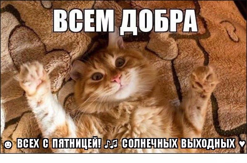 https://pp.vk.me/c626722/v626722244/41d7c/CNaESkNyDfM.jpg