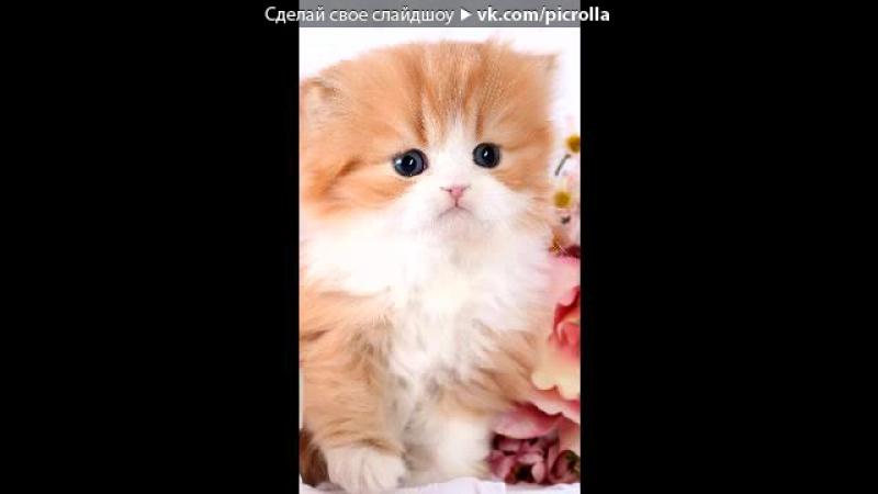 Кошки под музыку Ты мой котик кисса кисса мяу мяу кисса кисса мур мур Picrolla