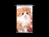 Кошки под музыку Ты мой котик - кисса кисса мяу мяу , кисса кисса мур мур. Picrolla