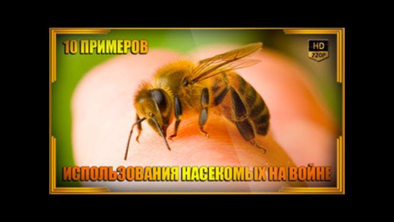 10 примеров использования насекомых на войне | Энтомологическое оружие