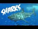 All About Sharks for Children Animal Videos for Kids - FreeSchool