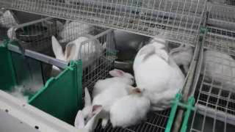 Кроликоферма, Ferma de iepuri.