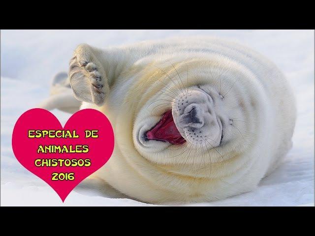 Especial de animales chistosos 2016 Parte 1 Animales chistosos gatos y perros