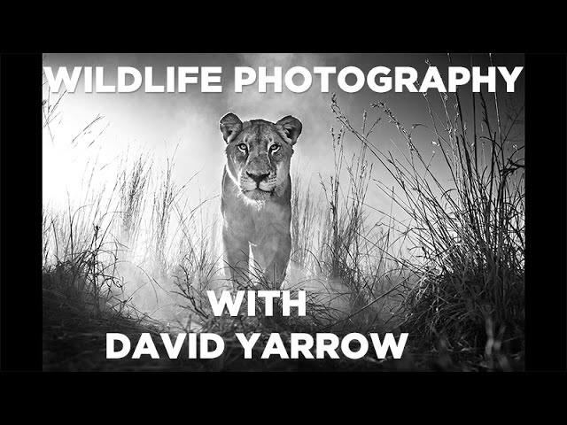 Wildlife Photography David Yarrow Shares His Photography Techniques GMAX STUDIOS