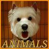 ANIMALS-Красногорск зоосалон,стрижка собак,кошек