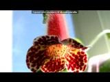 Моё цветочное хобби ) под музыку Zero Assoluto - Semplicemente Итальянская музыка из фильма