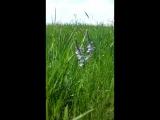 Дикие травы, ветер и пение птиц...