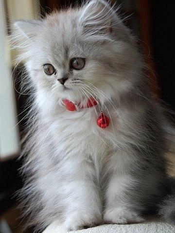 Милый Котёнок - фото №1