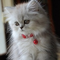 Милый Котёнок