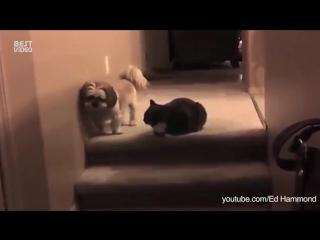 Собаки преодолевают страх перед котами