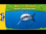 Meet the Animals 1 Great White Shark Wild Animals Little Fox Animated Stories for Kids