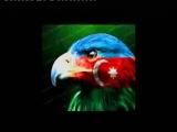 Azeri  toyu