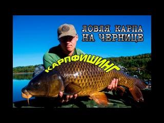Карпфишинг. Осенняя ловля карпа на Чернице. Рыбалка в Беларуси
