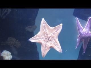 Московский зоопарк - морская звезда