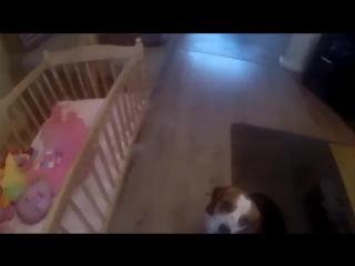 Собака стала няней для маленькой девочки