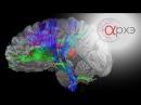 Вячеслав Дубынин Нейроны и нейросети Обзор основных структур головного и спинного мозга